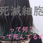 【髪の毛は死滅細胞】って何のこと?知れば納得、髪のこと。